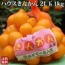【送料無料】 ギフト ハウスきんかん(ネット) 2L×1kg(約40個前後)【糖度14〜16度】 キンカン 金柑 鹿児島
