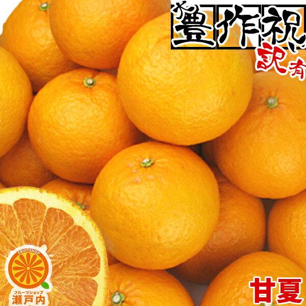 愛媛産甘夏(あまなつ)10kg訳あり・不揃い (一部地域除く) 愛媛県産家庭用フルーツ旬の果物くだもの果実青果食品みかん蜜柑柑橘