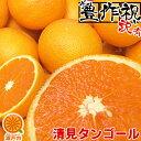 【買い回りに♪】愛媛産 清見タンゴール(清見オレンジ) 2k...