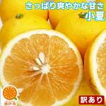 訳ありニューサマーオレンジ2kg【送料無料】小夏・日向夏・不揃い