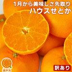 【Y倉庫品】愛媛産ハウスせとか2kg(訳あり)送料無料