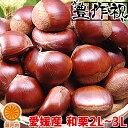 愛媛産 生栗 良品 約1kg(約40〜50個)【2品で+1k