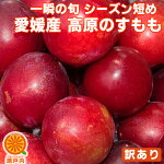 桃より美味くて安い!高原のすもも1パック【プラム】
