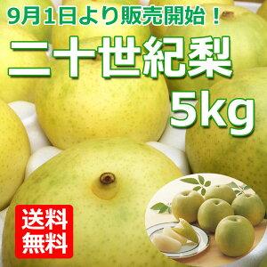 【産地直送 送料無料】 まえた農園 二十世紀梨 5kg箱入(12〜16玉)