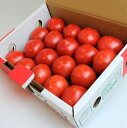 【フルーツトマト】【送料無料】楽天最安値に挑戦。これがトマト? 旨味と甘みがぎっしり詰ま...