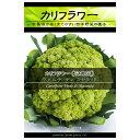 タネ・小袋 少量の西洋野菜種 5~7月まき 野菜タネカリフラワー:ヴェルディマセラッタ(黄緑実)*