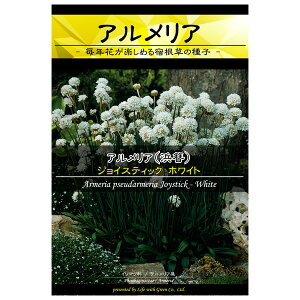 アルメリア シューダメリア:ジョイスティック ホワイト[花タネ]
