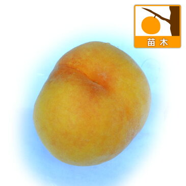 【ラッキーシール対応】果樹の苗/モモ(桃):黄金桃(オウゴントウ)4〜5号ポット[黄肉桃の代表的な品種・8月上旬〜中旬収穫]