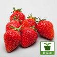 野菜の苗/イチゴ:とよのか(豊の香)3号ポット