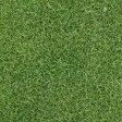[暑さに強く日陰にも向く タネ 40平米分]芝の種:ケンタッキーブルーグラスブルーノート1kg