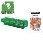 春まき種の苗つくりセット:ストロベリートマト(食用ほおずき 草丈150cm位)