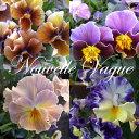 1株ずつ花色が違います草花の苗/ビオラ:ヌーヴェルヴァーグ3.5号ポット