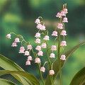 草花の苗/ドイツすずらん:ピンク1芽入り3号ポット2株セット
