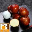 果樹の苗/大実ナツメ:スーパージャイアント4号ポット
