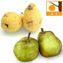 果樹の苗/西洋梨2種セット:ラフランスとバートレット