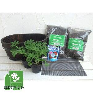 草花の苗/蚊よけ植物・蚊連草(かれんそう)栽培セット(鉢・土・肥料付き)焼き杉プランター