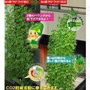 吊下げ式の緑のカーテンを簡単に設置できます。緑のカーテン 5m吊下げタイプ ワイド800mm