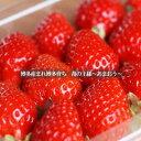 福岡県限定生産!苺の王様 あまおう 朝摘みの苺をお届けします。福岡県、西日本 九州 福岡から...