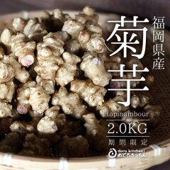 九州 野菜★菊芋[2kg] 天然のインスリンと呼ばれている菊芋♪[数量限定][配送日指定不可]…