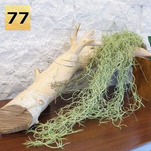 フェイクグリーンハンギング壁掛けコウモリラン(ビカクシダ)コロナリウム人工観葉植物おしゃれウォールアート造花壁面緑化パネルボードアートフレームアレンジメント飾り