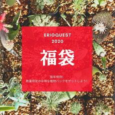 【数量限定】福袋2020【送料無料】\\\\ご予約受付中!!!////