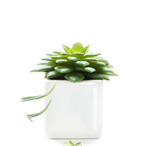 アザ ASA ミニグリーンポット XIV [DECO] 万代草 カップ テーブル 花瓶 陶器 陶磁器 ドイツ