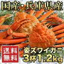 送料無料【国産 浜茹で香住がに(紅ズワイガニ) 3杯 1.2...
