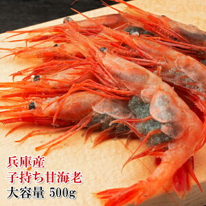 (兵庫県産 子持ち 甘えび 500g)新鮮な甘海老を船内冷凍してあります!もちろん生食用 甘くてねっとりした極上の美味しさ!(冷凍)