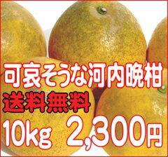 ジューシーで爽やか柑橘です。これからの暑い時期には冷蔵庫で冷やしてお召上がり下さい。【送...