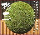 杉玉( 酒林 )30センチ