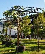 フルーツ パーゴラ 積水樹脂 ガーデニング ガーデン
