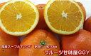 ネーブルオレンジ 国産 熊本(網田産)訳あり 1箱 箱込10キロ(9kg+保証分500g)【送料無料】みかん ネーブルオレンンジ