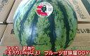 熊本産 スイカ 訳あり 1玉入り サイズM以上(5キロ以上)...