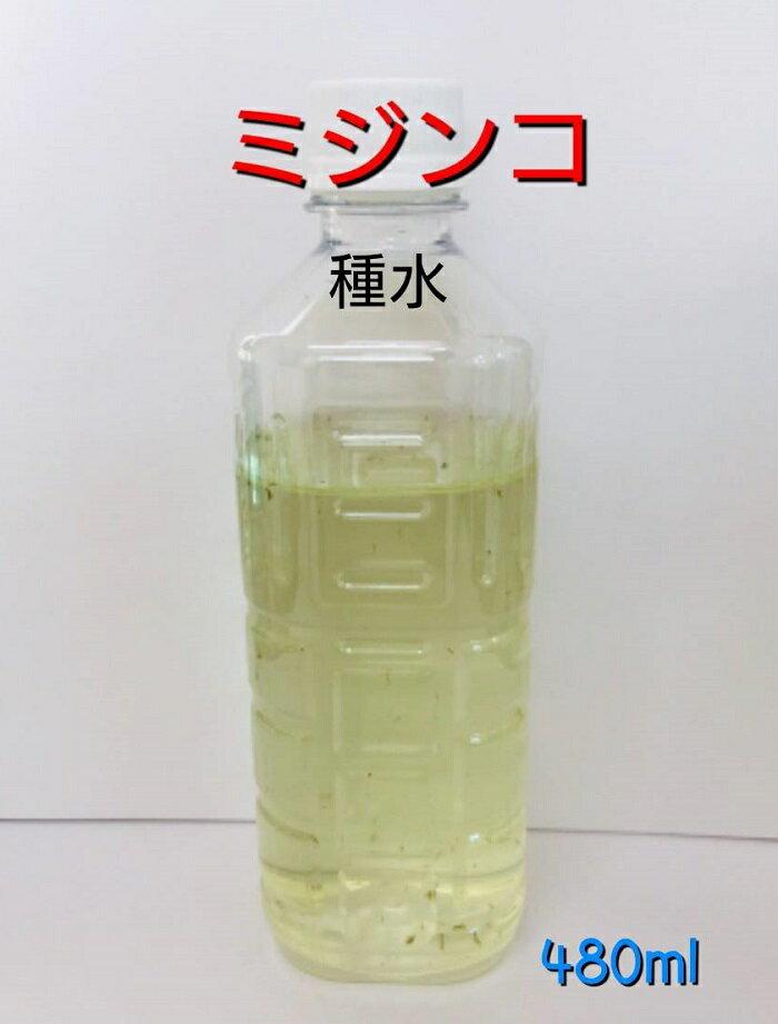 【活き餌】ミジンコ480ml