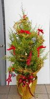 LEDライトつき クリスマスツリー ゴールドクレスト(七号鉢)