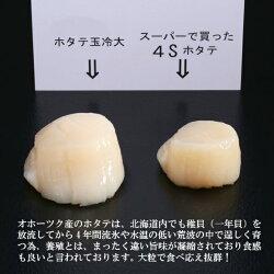 【ふるさと納税】10-68 オホーツク産ホタテ玉冷大(1kg) 画像2