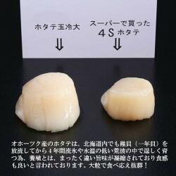 【ふるさと納税】10-68 オホーツク産ホタテ玉冷大(1kg) 画像1