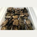 【ふるさと納税】10-248生牡蠣大〜特大サイズ約2.8kg(20〜25個入)