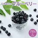【ふるさと納税】令和4年度産「日本最北のブルーベリー」250