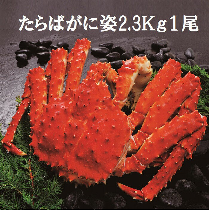 【ふるさと納税】【12月20日決済確定分まで年内配送】たらばがに姿2.3kg×1尾 D-01021