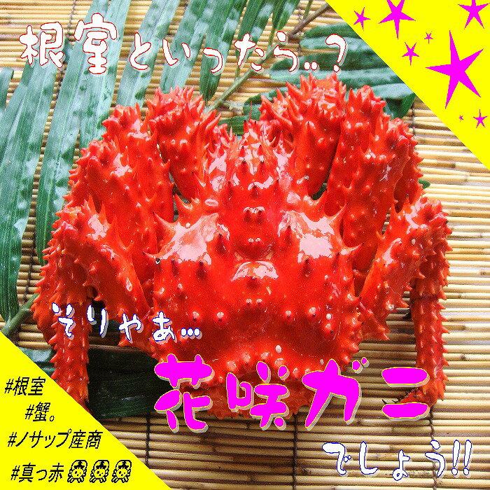 [北海道根室産]花咲ガニ400g以上×1尾