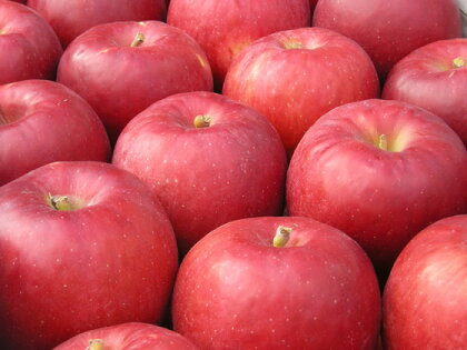 関尾農園 りんご約5キログラム(収穫状況により津軽・昂林・紅将軍のいずれか)(期間限定)