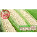 【ふるさと納税】≪石橋農園≫白いとうもろこし【雪の妖精】10本(L-LL) 【野菜・とうもろこし・セット・詰合せ】 お届け:2020年8月上旬〜9月上旬まで