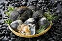 【ふるさと納税】ホッキ貝(貝付き)(冷蔵)