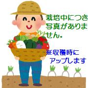 【ふるさと納税】伊藤農園の春掘り長いも(平成30年4月~5月発送)(※詳しくは商品説明をご覧ください)