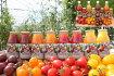 【ふるさと納税】まるほり野菜園カラフルミニトマトジュースセットD