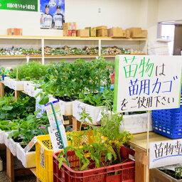 【ふるさと納税】[B27]道の駅田園の里うりゅう「特産品・農産品引換券A」