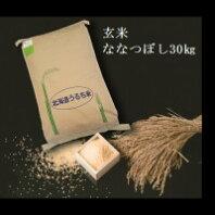 【令和2年度産】【ふるさと納税】 2412 玄米ななつぼし30kg×1袋