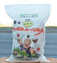 令和元年産 稲華屋のあっぱれあっぱれ米 ゆめぴりか 無洗米 10kg