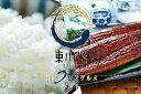 【ふるさと納税】東川米×大崎鰻 東川米とあわせる贅沢うなぎグ
